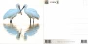 Bird Pix Postal Card