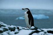 Antarctica 2004
