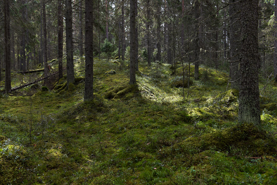 Birdless forest | Vogelloos bos