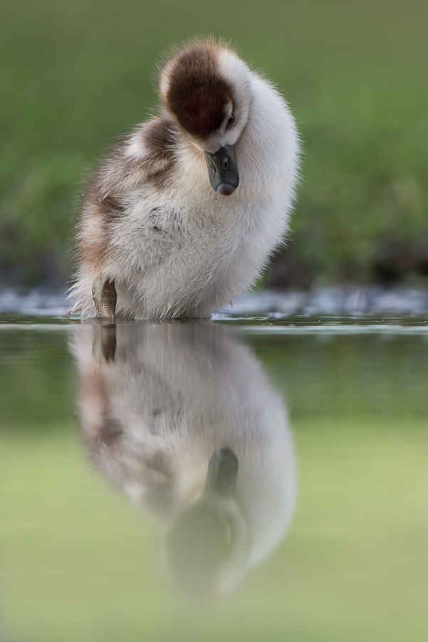 Looking at own reflection: that one looks just like....