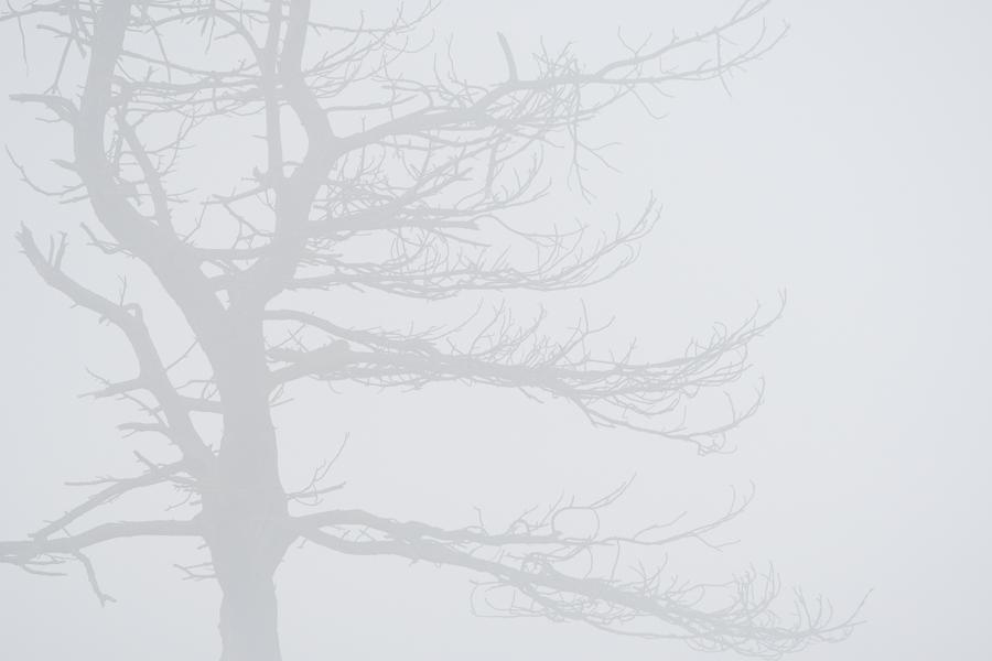 Foggy Tree   Boom in de mist