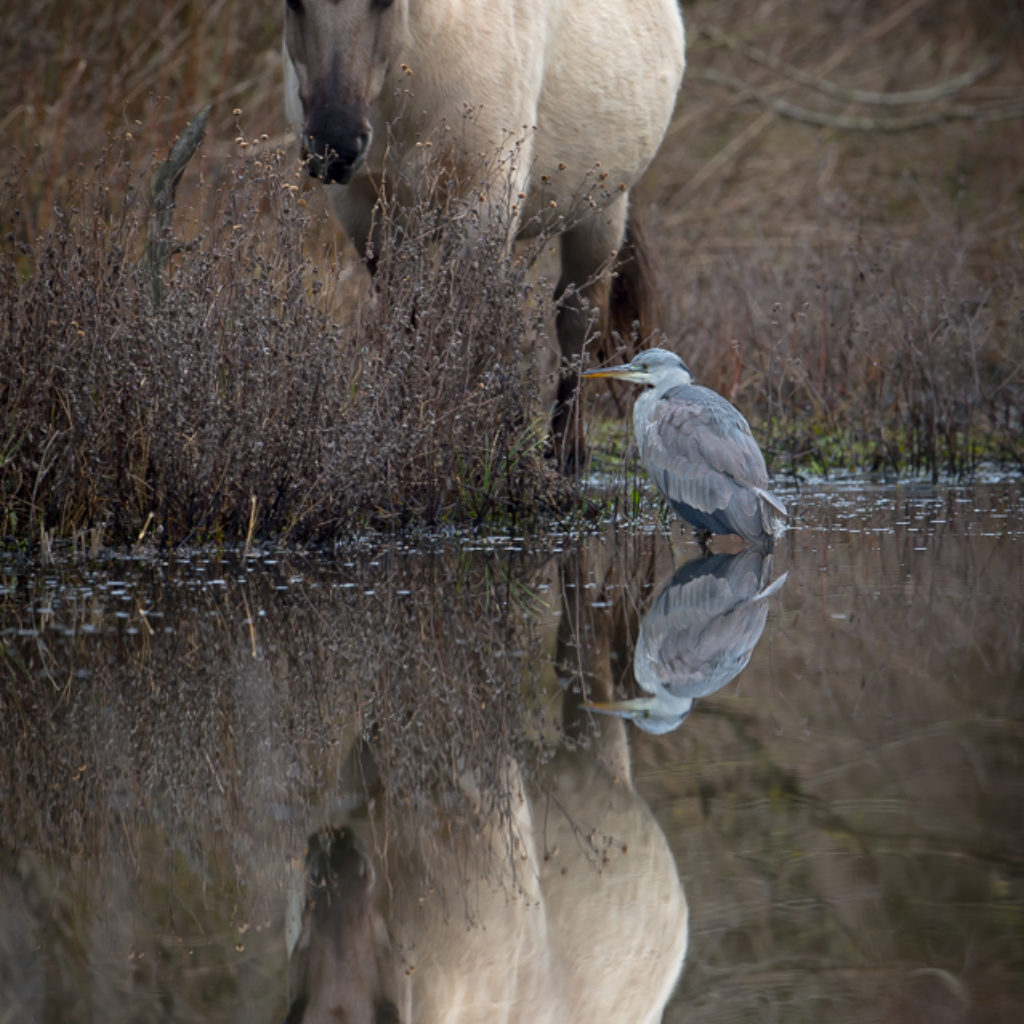 Of Herons and Horses