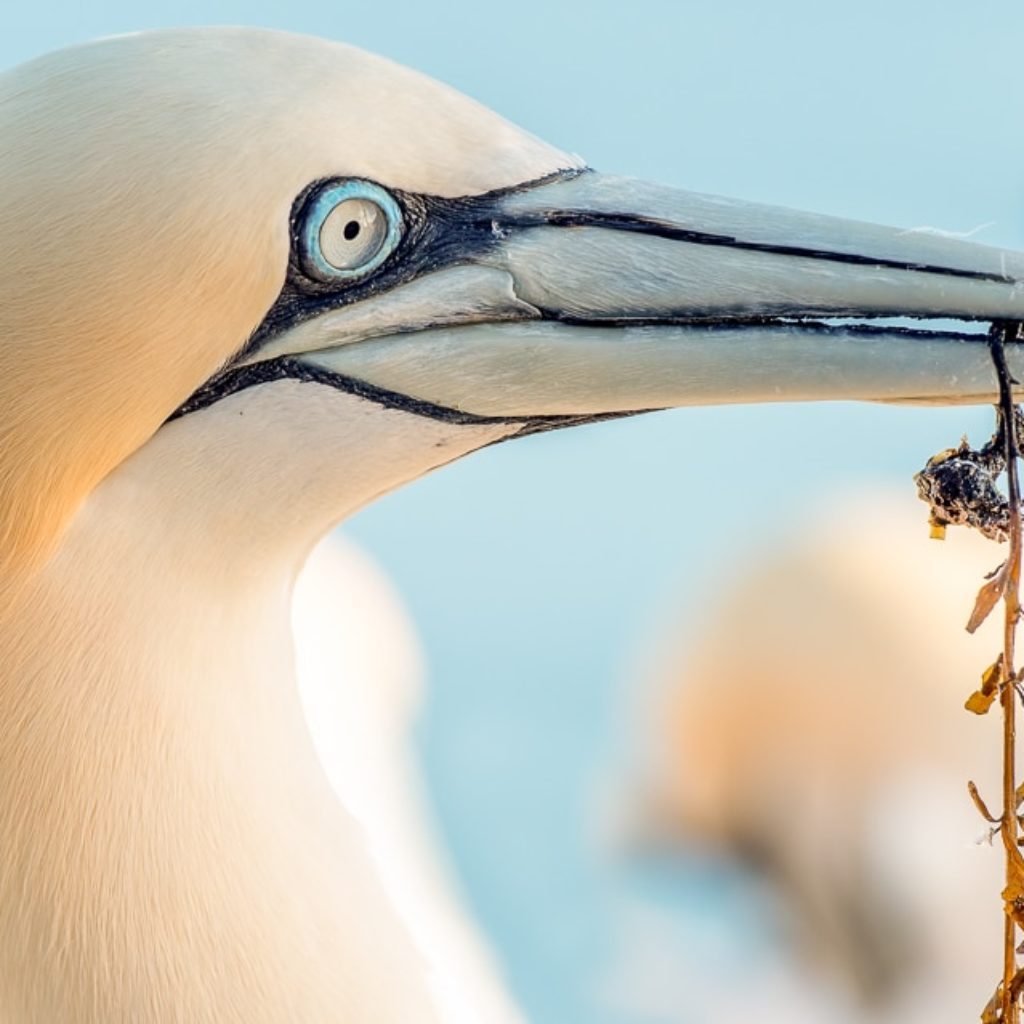 Heads of Helgoland