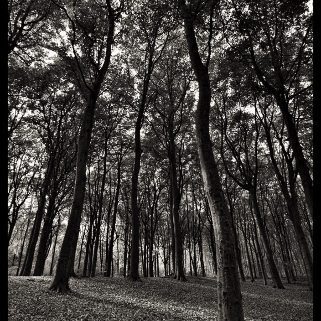 Forest in B&W