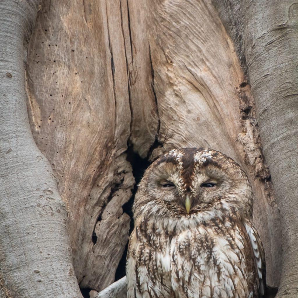 Owl @ 1000mm