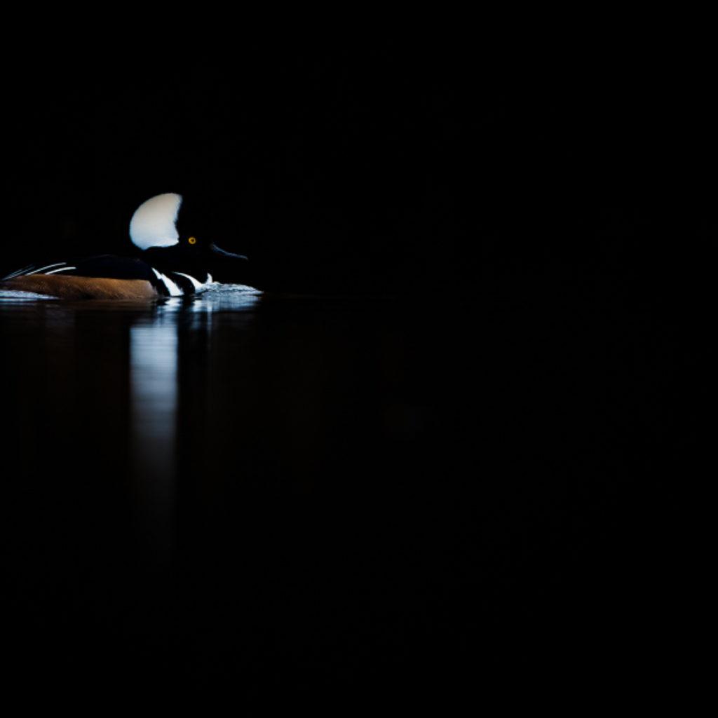 Hoodie in the Dark
