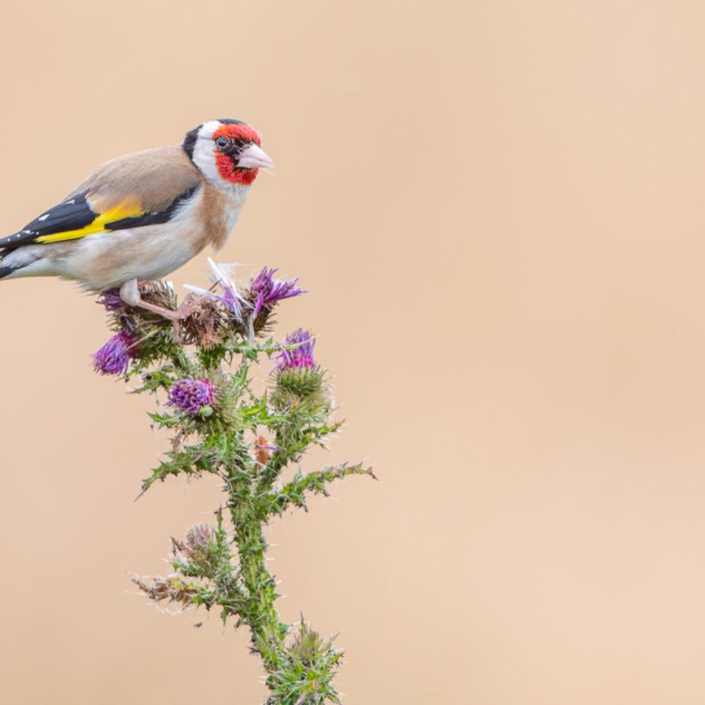 The Tartt Bird