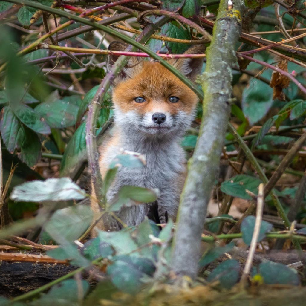 The Fox Files