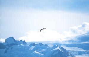 Condor (Patagonia)