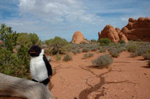 Penguin in the Desert (USA 2006)