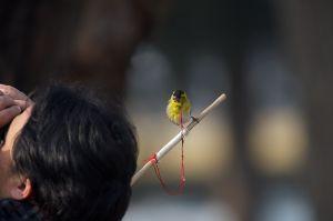 Bird on a stick (!?!?!)