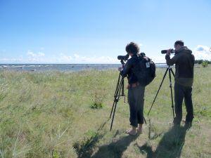 A day of birding around Riga (Latvia)