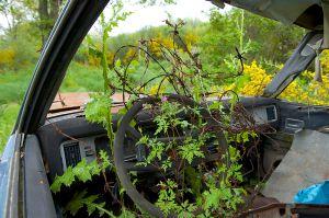 Abandoned vehicle | Verlaten Auto