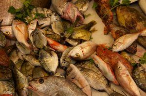 Fresh Fish | Verse Vis