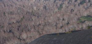 Birch Tree | Berk