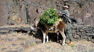 A Donkey named Carla (Cape Verde, 2012)